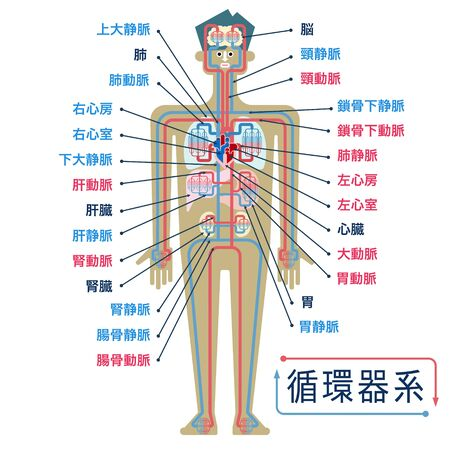 Simple illustration of the circulatory system with the names of each part in Japanese Çizim