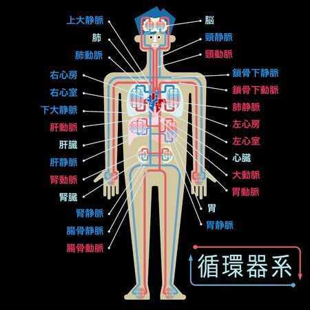 Simple illustration of the circulatory system with the name of each part in Japanese on the black back Stock Illustratie