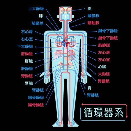 Simple illustration of the circulatory system with the name of each part in Japanese on the black back Illustration