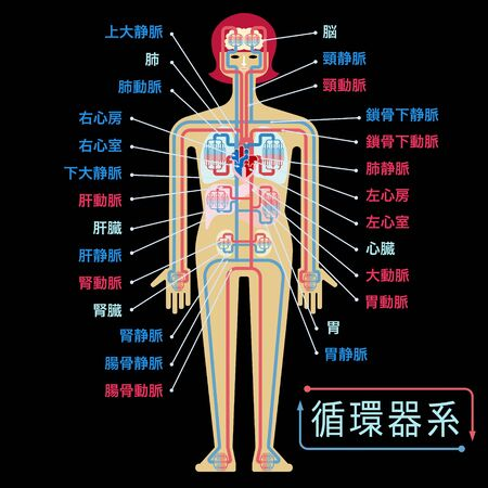 Simple illustration of the circulatory system with the name of each part in Japanese on the black back Stockfoto - 133450830