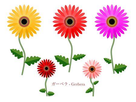 Simple illustration of Gerbera