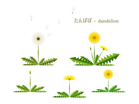 Simple illustration of dandelion 免版税图像 - 140797418