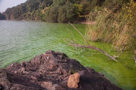 China's Taihu Lake Cyanobacteria