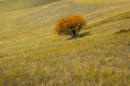 midwest usa: a tree on the vast grassland