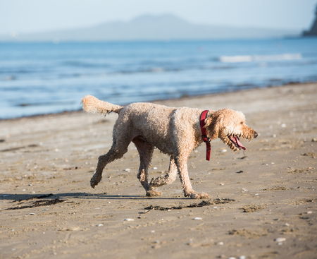 Dog at the beach during the day