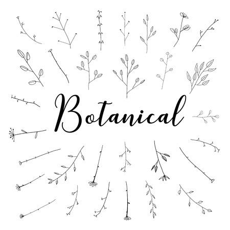 Hand drawn botanical set, Doodle floral element, Vector illustration. Ilustrace
