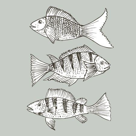 Set of hand drawn fish, Healthy food drawings set elements for menu design. Vector illustration. Ilustrace