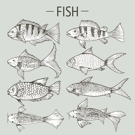 Set of hand drawn fish, Healthy food drawings set elements for menu design. Vector illustration. 矢量图像