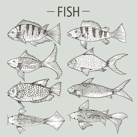 Set of hand drawn fish, Healthy food drawings set elements for menu design. Vector illustration. Illustration