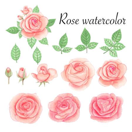 Set of rose watercolor elements. Flower, leaves, bud, botanic isolated on white background. 免版税图像