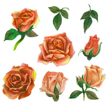 Set of rose watercolor elements. Vector illustration.