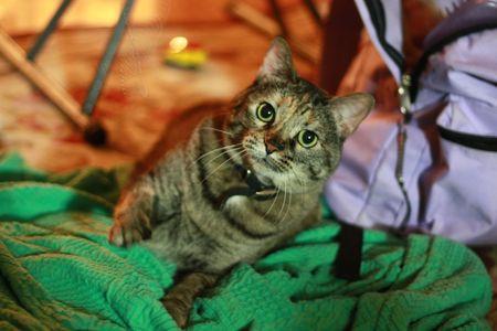 Mystery Cat Imagens - 4189515