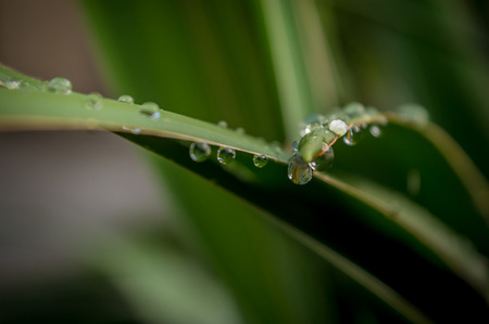 dewdrops: Dewdrops on the leaf 2