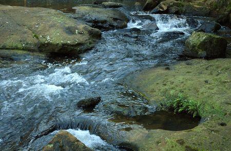 Stream in a rainforest.