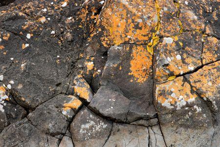 Beach rocks with yellow orange moss.