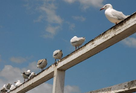 Seagulls hanging out on a wharf railing.