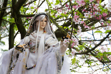 Doll and Cherry blossom on focus