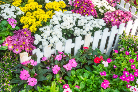white picket fence: White picket fence surrounded by flowers in a front yard. Stock Photo