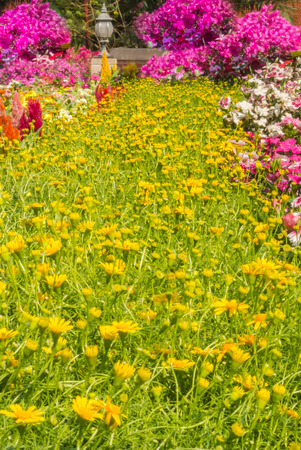 Landscaped flower garden with lots of colorful blooms. photo
