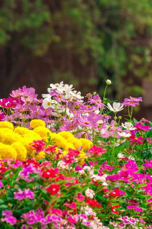 Gepflegt Blumengarten mit vielen bunten Blüten. Standard-Bild