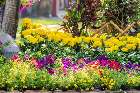 Landscaped flower garden with lots of colorful blooms.