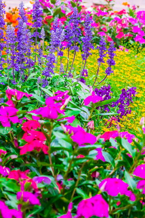 sun flare: Landscaped flower garden with lots of colorful blooms with sun flare. Stock Photo