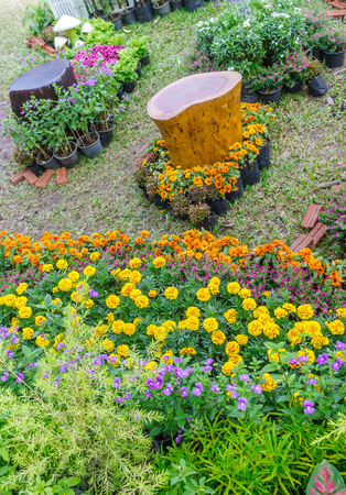 Home flowers garden on summer.