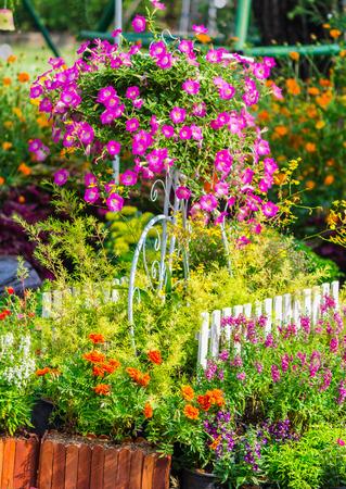 Vintage white bike and flowerpot in cozy home flower garden on summer.