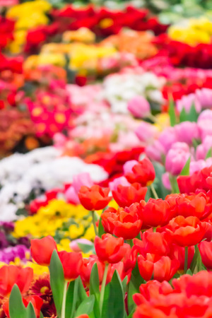 Variety of spring flowers and tulips blooming in beautiful cozy garden on summer.