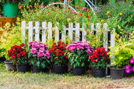 White picket fence and flowers in garden on summer. Stock Photo