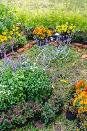 Topview vintage bike planter in home flowers garden on summer. Stock Photo