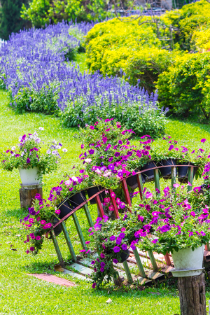 Flowers and flower pot decoration in beauty cozy home flower garden on summer.