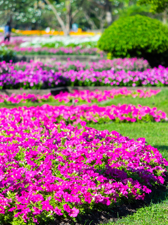 Vivid flower and plant decoration in cozy home flower garden on summer.