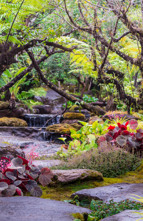 Stream flows through cozy home flower garden after rain. Imagens