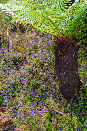Stone and green moss decoration in japanese cozy home flower garden after rain.
