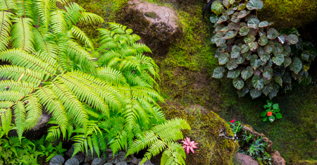 Panorama stone and green moss decoration in japanese cozy home flower garden after rain. Imagens