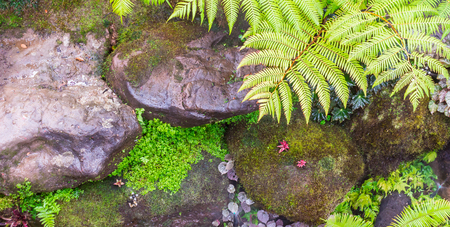 Panorama stone  and green moss decoration in japanese cozy home flower garden after rain.