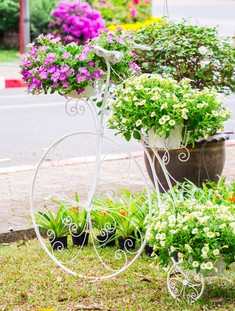 Vintage white bike and flower pot decoration in cozy home flowers garden on summer.
