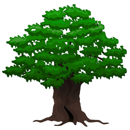 Vector illustration  Big old oak tree on a white background Vector