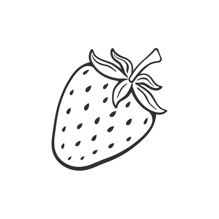Vector illustration. Hand drawn doodle of sweet strawberry. Healthy food. Cartoon sketch. Decoration for greeting cards, posters, emblems