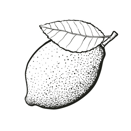 Hand drawn whole lemon with leaf