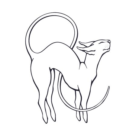 Vector illustration. Hand drawn doodle of stretching sphinx cat with a long curled tail. Thoroughbred domestic  animal. Pet symbolizing flexibility. Cartoon sketch. Isolated on white background