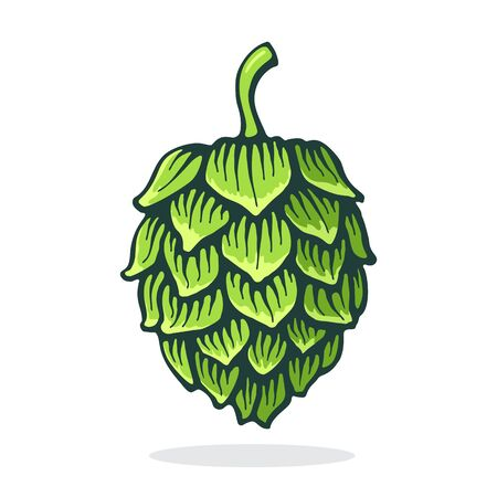 Vector illustration. Green cone of hop. Symbol of beer, pub and alcoholic beverage. Graphic design with contour. Clip-art print for packaging, menu, signboard, showcase. Isolated on white background
