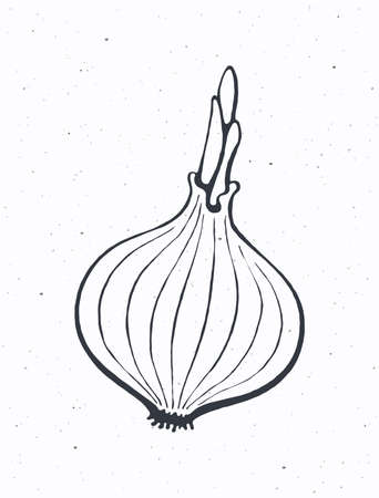 Bulb of onion with sprout. Healthy vegetarian food. Ingredient for vegetable salad. Vector illustration. Only outline Isolated on white background. Clip art for packaging, label, menu, signboard