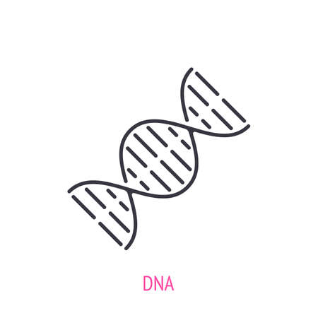 DNA helix. Outline icon. Vector illustration. Molecule spiral with genetic code. Symbols of scientific research and education. Thin line pictogram for user interface. Isolated white background 矢量图像