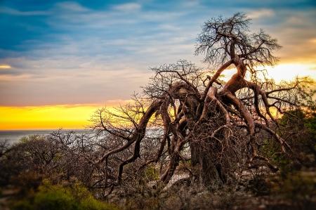 paisagem: Africano Baobab árvore sol