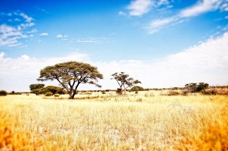 botswana: Prairie Kalaharie Africa - Botswana
