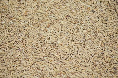 Thai raw rice Stock Photo
