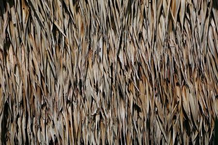 Fisher Roof form leaf