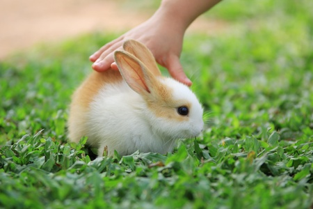 Rabbit with a Children Hand reaching out to pick it up.